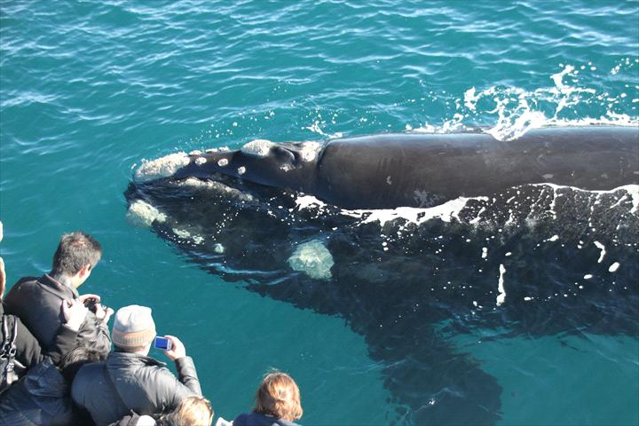 Naturaliste Charters - Whale Watching & Eco Tours