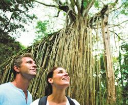 Curtain Fig, Natural Attraction - Atherton Tablelands