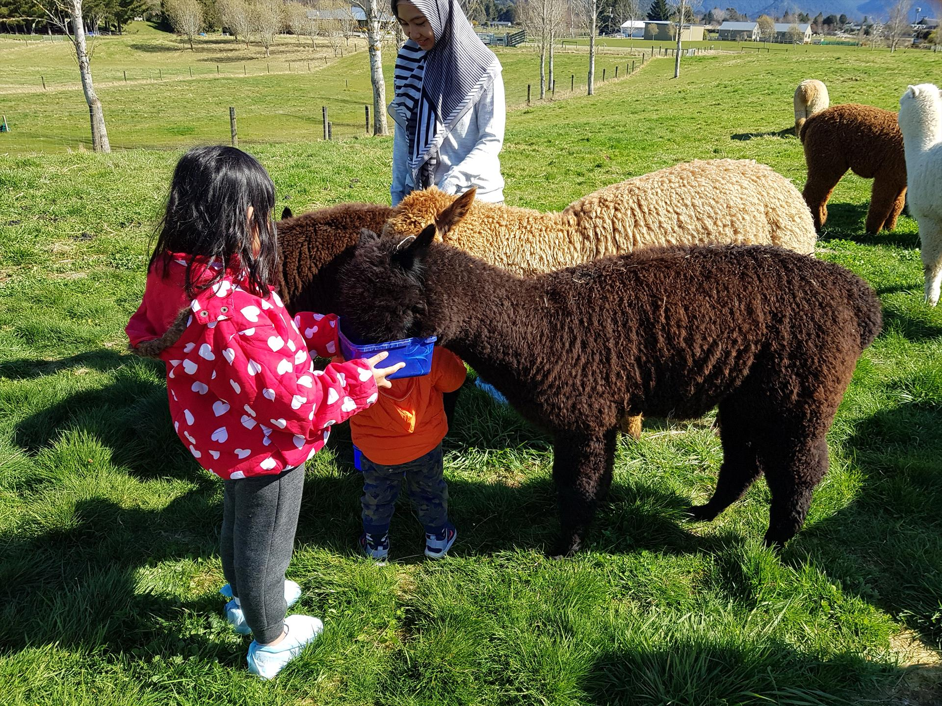 Kepler Mountain View Alpacas