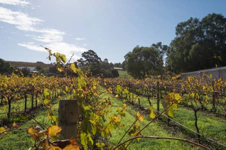 131 Your vineyard home in the Heart of the Vale