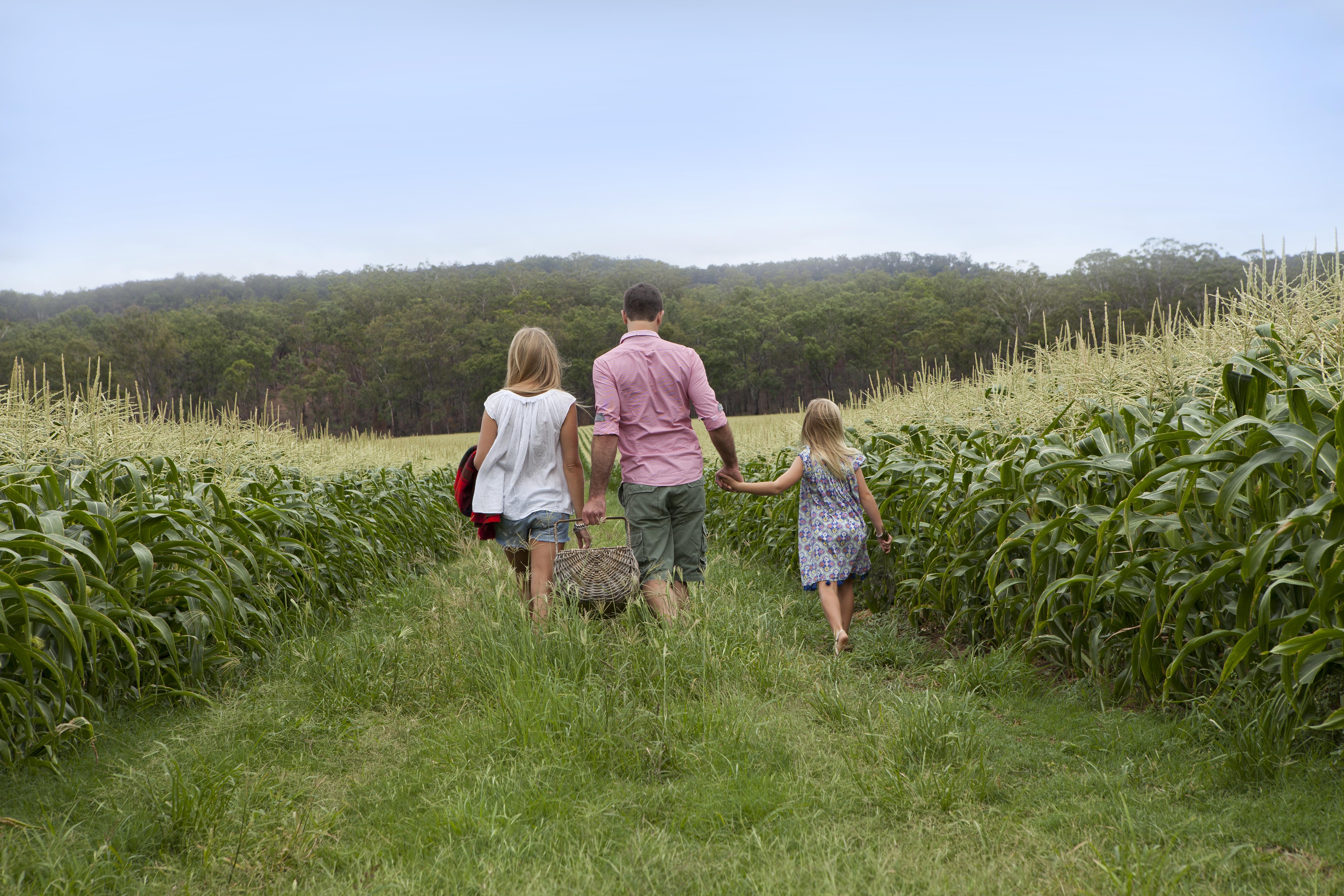 A walk through a Mulgowie corn crop