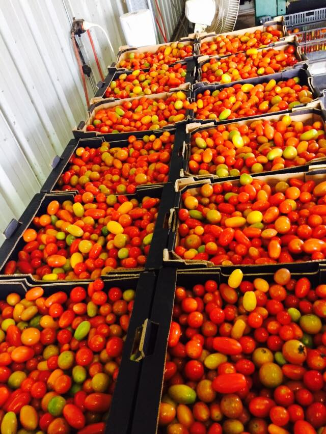 Organic produce lockyer valley