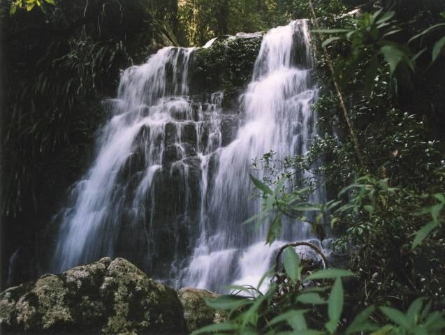 Selva Falls
