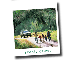 Drives in the Richmond Valley, including Lions Road and Rainforest Way