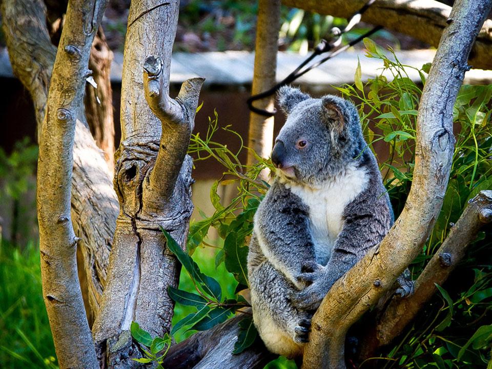 Aussie Perth Tours