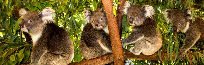 Caversham Wildlife Park  and  Zoo