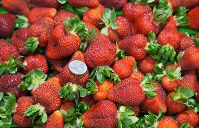 Harvest the Fleurieu
