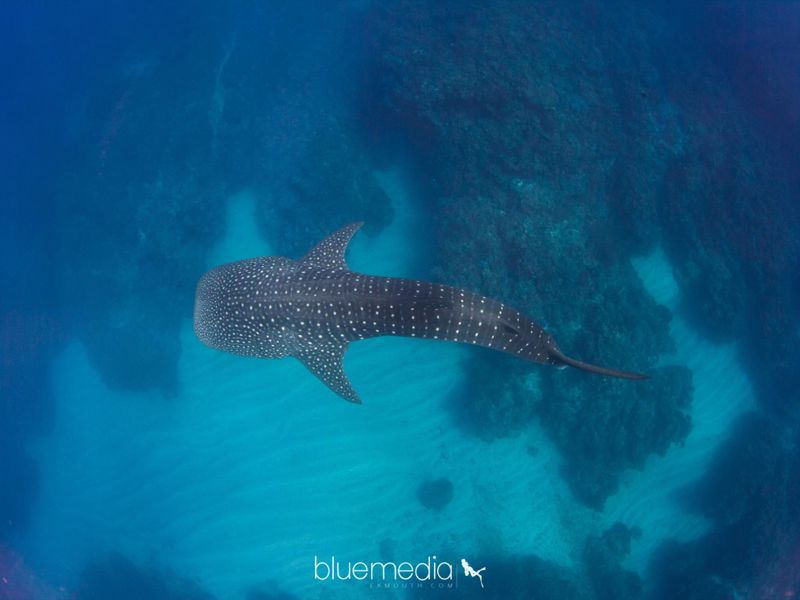 Ningaloo Blue Dive
