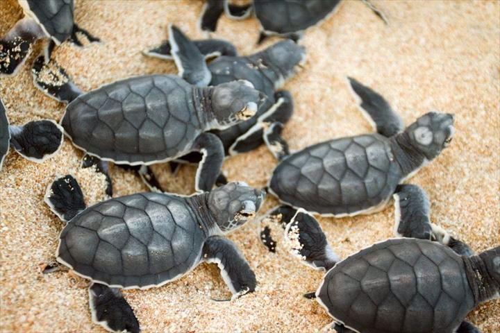 Turtle Tours - Exmouth Parks & Wildlife
