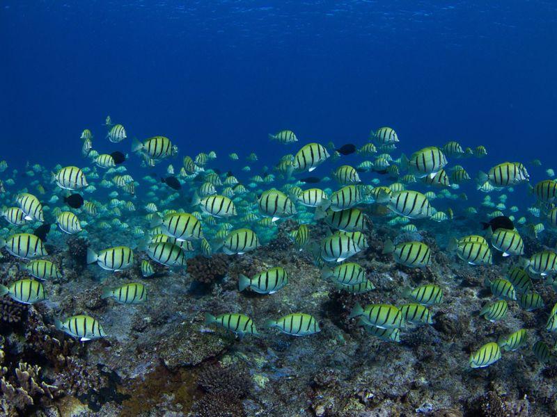 Kings Ningaloo Reef Tours