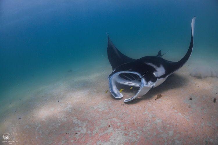 Ningaloo Reef Dive