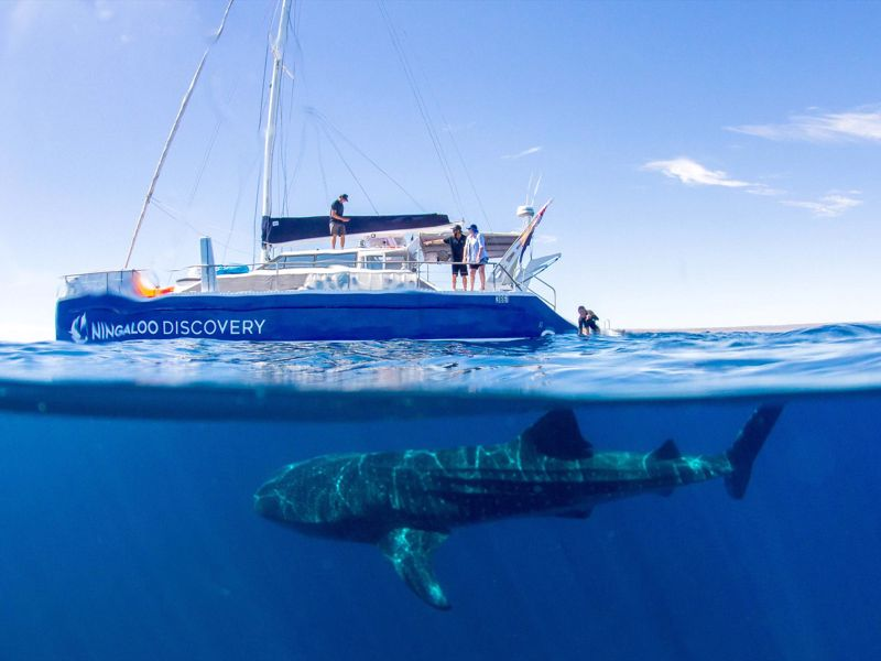 Ningaloo Discovery Whale Shark Tours