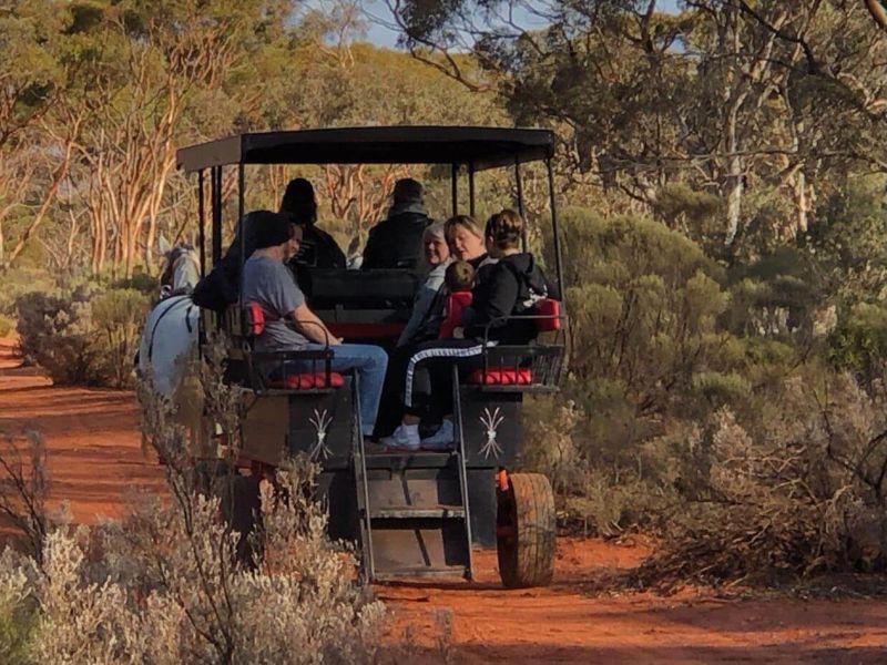 No Rush Goldrush Wagon Rides
