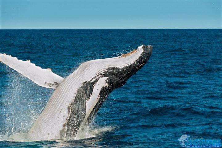 Albany Ocean Adventures - Albany Whale Adventures