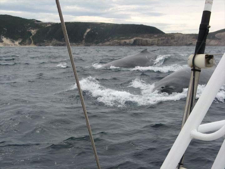 Albany Whale Tours/ Sail-A-Way
