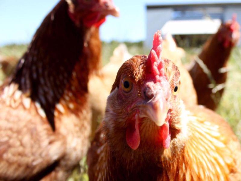 Bimbadeen Phillip Island Farm Tours - closed until further notice