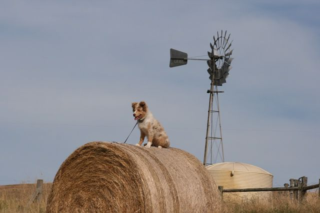 Moo Ridge Farm Stay