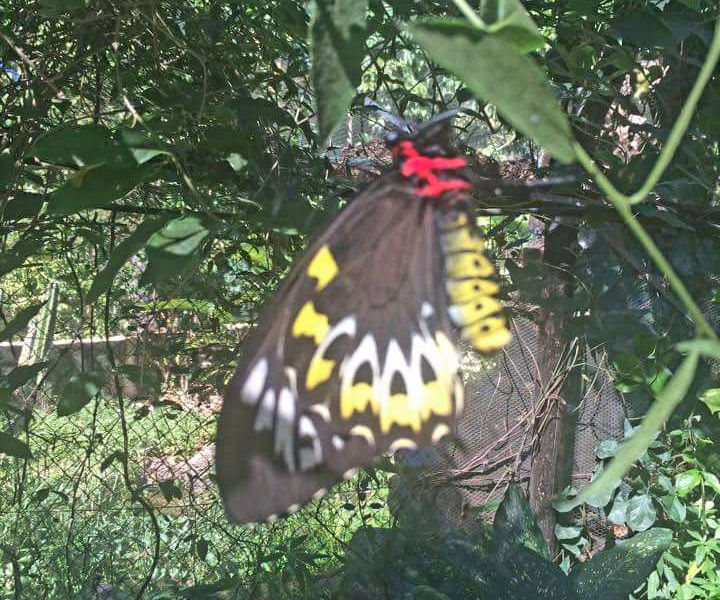 Batchelor Butterfly and Animal Farm