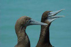 Kimberley Birdwatching