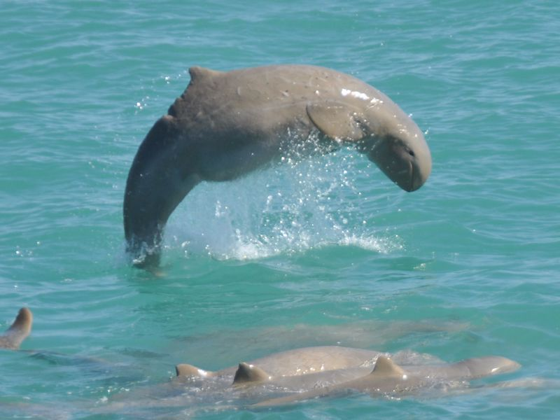 Broome Whale Watching Charters