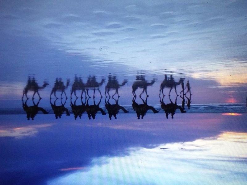 Sundowner Camel Tours