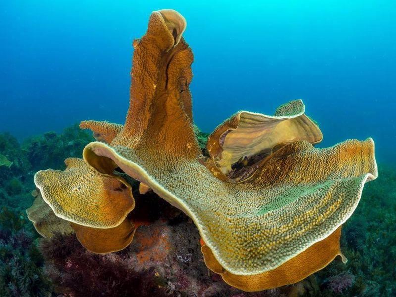 Octopus Garden Marine Charters