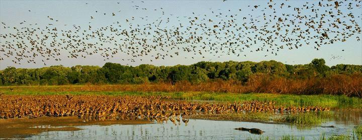 Davidsons Arnhemland Safaris