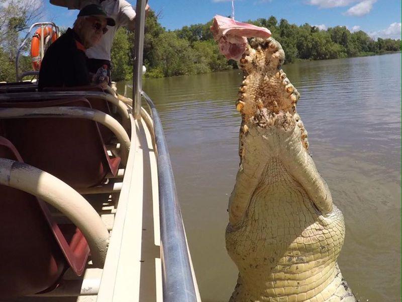 Adelaide River Transfers