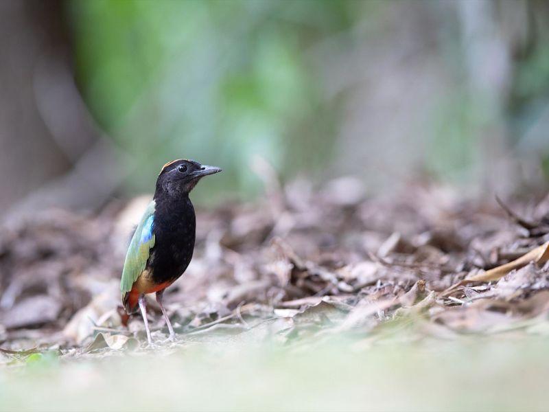 NT Bird Specialists