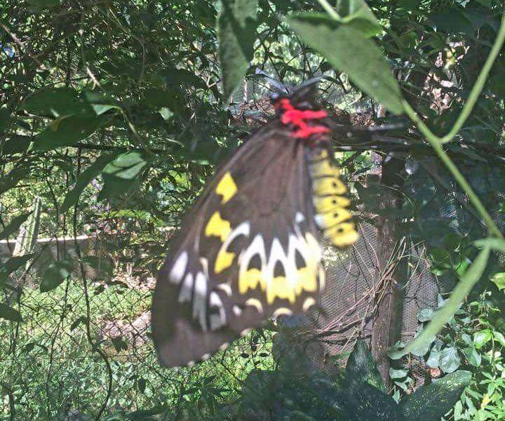 Batchelor Butterfly Farm Resort