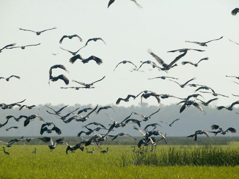 Bamurru Plains