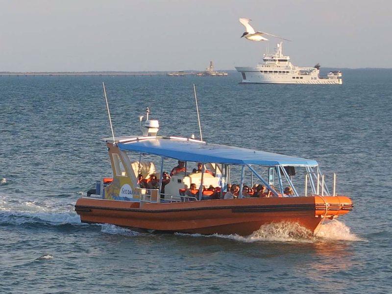 Sea Darwin