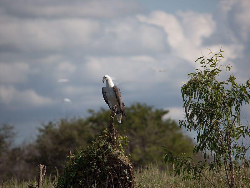 Wildlands Wetlands Safari Cruises