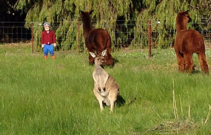 Ibis Park Farmstay