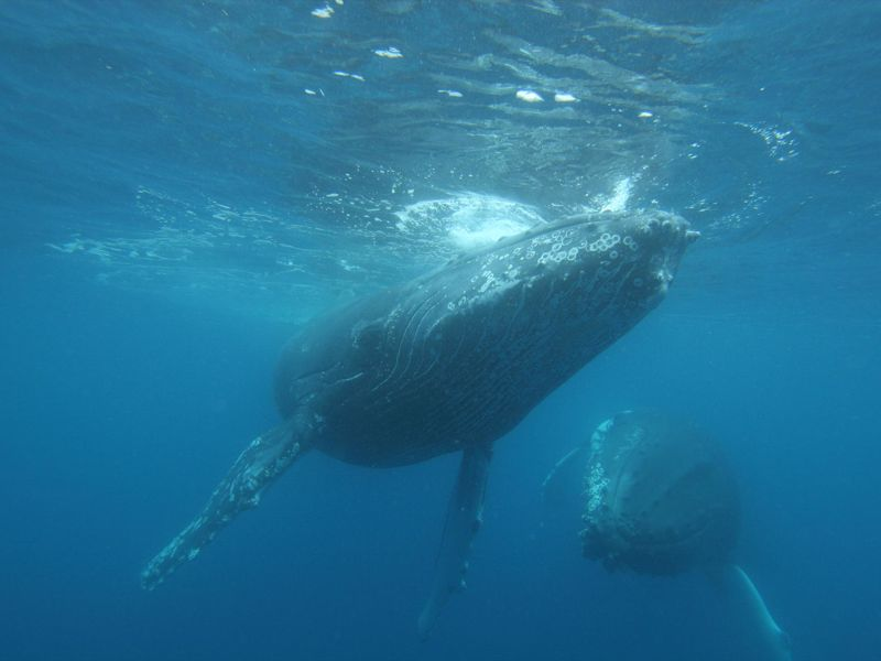Whale Watch Western Australia