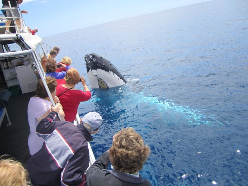 Legend Charters Whale Watching & Deep Sea Fishing