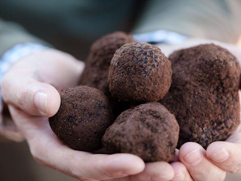 Australian Truffle Traders