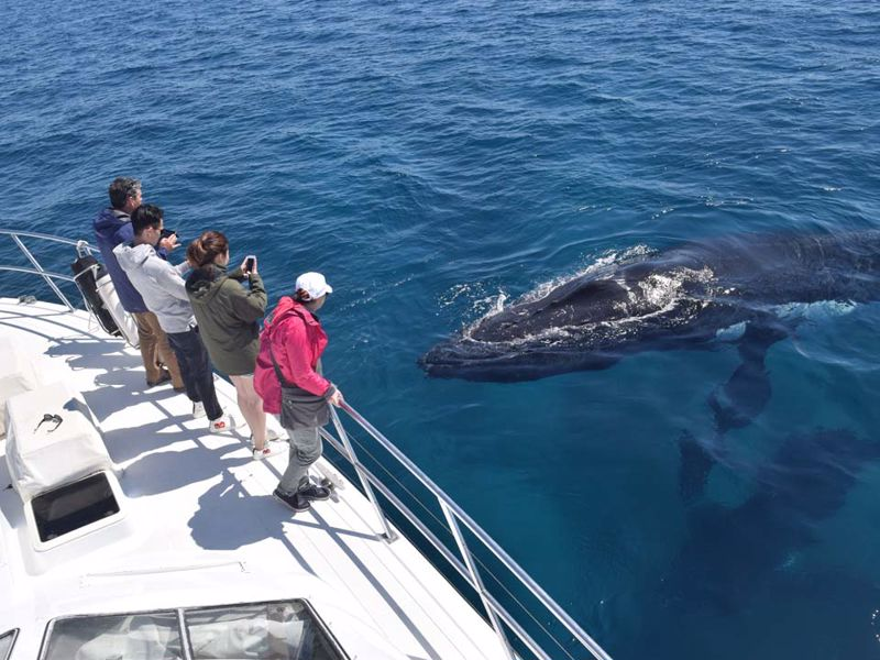 All Sea Charters Whale Watching