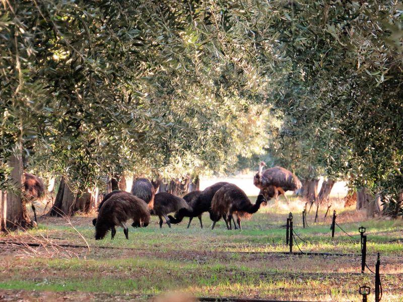 Forage Safaris