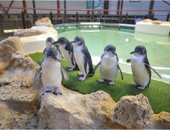 Penguin Island Ferry & Cruises