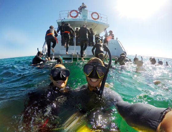Swim with Wild Dolphins