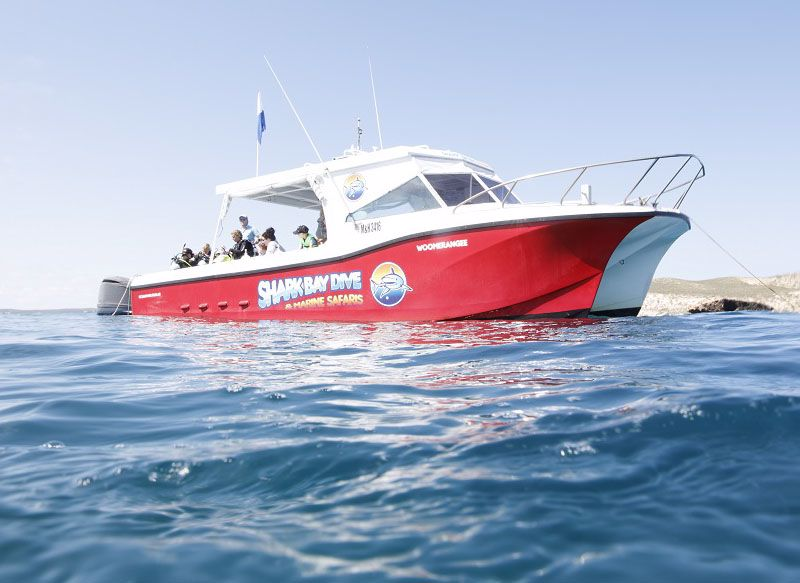 Shark Bay Dive and Marine Safaris