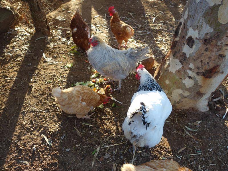 Settlers Rest Farmstay Swan Valley