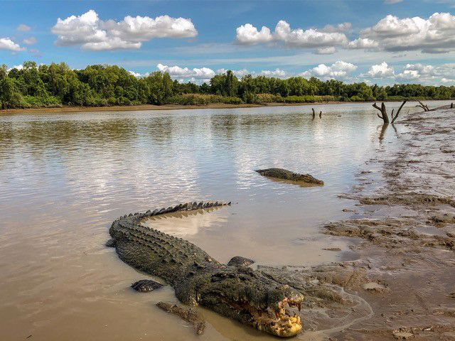 Adelaide River Queen Jumping Crocodile Cruise