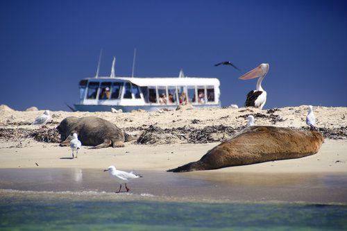Perth Wildlife Encounters (Penguin Island)