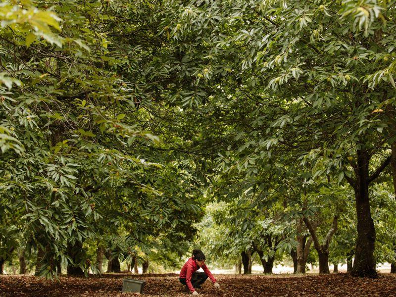 Chestnut Brae Farmstay