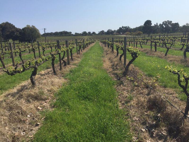 Sandalford Wines Swan Valley